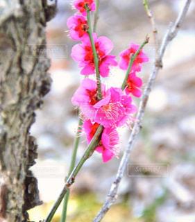 近くの花のアップの写真・画像素材[1818242]