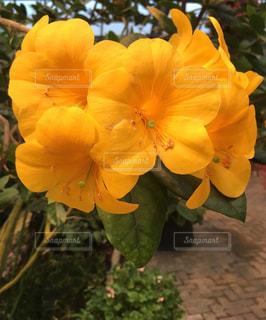花,緑,黄色,鮮やか