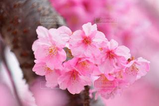 花のアップの写真・画像素材[1838926]