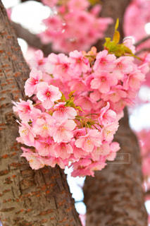 近くの花のアップの写真・画像素材[1838948]