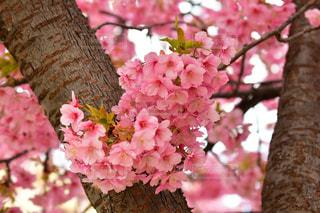 花のアップの写真・画像素材[1838997]