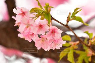 近くの花のアップの写真・画像素材[1839031]