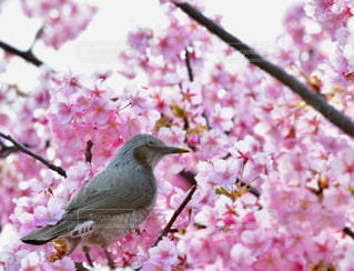 花にとまる小鳥の写真・画像素材[1843312]