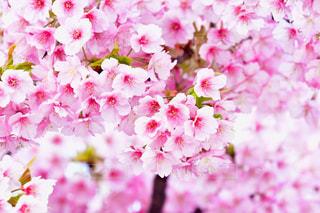 近くの花のアップの写真・画像素材[1843319]