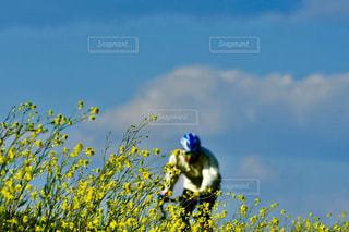 花のアップの写真・画像素材[1870574]