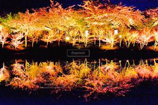 ライトアップの写真・画像素材[1875005]