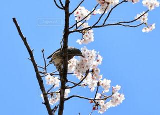 鳥の写真・画像素材[1968395]