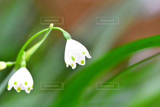 花のアップの写真・画像素材[2051691]