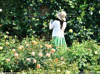 薔薇の香りの写真・画像素材[2119203]