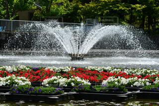 花,緑,赤,白,水,池,噴水