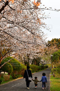 空,桜,緑,後ろ姿,子供,樹木,大人,歩道,お散歩,三人