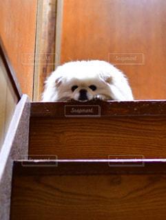 階段からののぞき見の写真・画像素材[2149064]