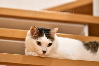 猫の写真・画像素材[2149180]