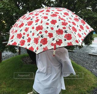雨,傘,緑,赤,白,樹木,人,芝