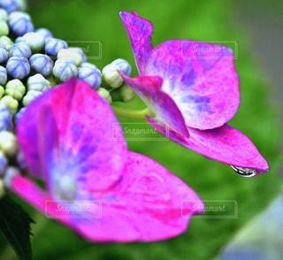 花のクローズアップの写真・画像素材[2278636]
