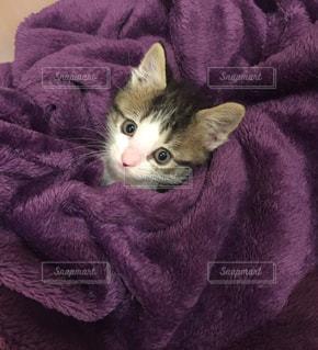 毛布の上に横たわる猫の写真・画像素材[2291787]