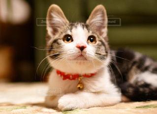 猫のクローズアップの写真・画像素材[2291860]
