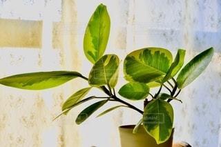 植物に花を持つ花瓶の写真・画像素材[2728576]