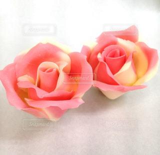 近くの花のアップの写真・画像素材[1369176]