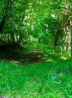 緑豊かな緑のフィールドの真ん中の木の写真・画像素材[1401394]