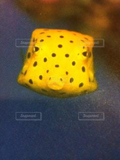 黄色の写真・画像素材[1404853]