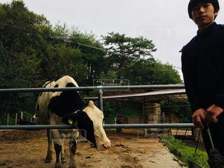 空,屋外,牛,樹木,哺乳類,乳牛