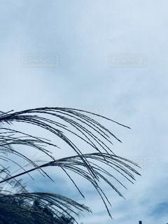 晴れた日にヤシの木のグループの写真・画像素材[1468044]