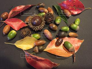紅葉,どんぐり,くり,クヌギ,ドングリ,木ノ実