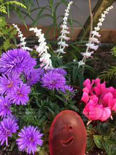 紫の花の束の写真・画像素材[1541083]