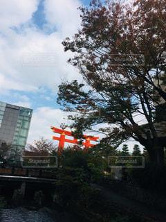 空,秋,屋外,鳥居,樹木,朱色,草木