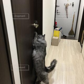 ドア,尻尾,ノブ