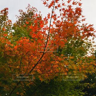 近くの木のアップの写真・画像素材[1611516]