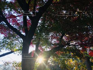 近くの木のアップの写真・画像素材[1621255]