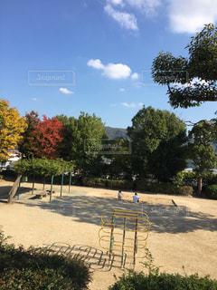 公園の木の写真・画像素材[1650702]