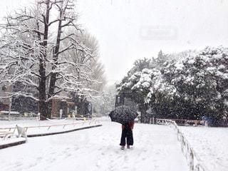 冬,屋外,白,樹木,男の子,ホワイト,覆う