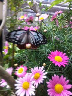 植物にピンクの花の写真・画像素材[1688206]