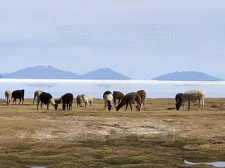 屋外,世界遺産,塩,ウユニ塩湖,ボリビア,日中