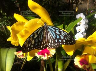 花,鮮やか,蝶