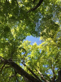 木のクローズアップの写真・画像素材[2118952]