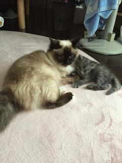 横たわる猫の写真・画像素材[2323693]