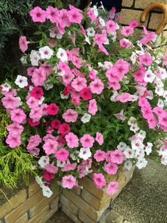 花のクローズアップの写真・画像素材[2382486]