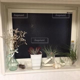観葉植物コレクションの写真・画像素材[2722811]