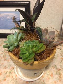 多肉植物の鉢と写真の写真・画像素材[2723019]