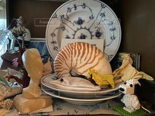 皿の上に座っているオウムガイの写真・画像素材[2797738]