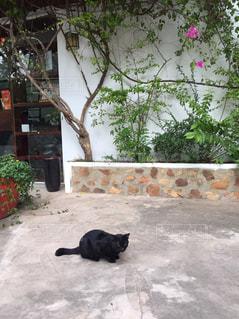 猫,動物,景色,ペット,人物,南米,ネコ