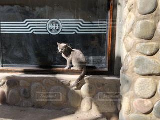 猫,カフェ,動物,ペット,人物,窓辺,石,南米,看板猫,ネコ