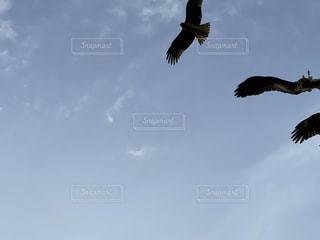 空を飛んでいる鳥の写真・画像素材[2983875]