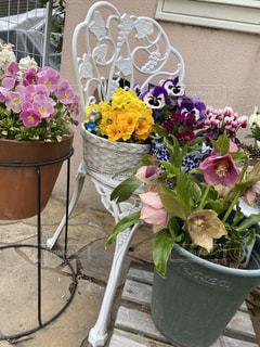 テーブルの上に紫色の花で満たされた花の写真・画像素材[3030559]