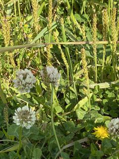花園のクローズアップの写真・画像素材[3143495]