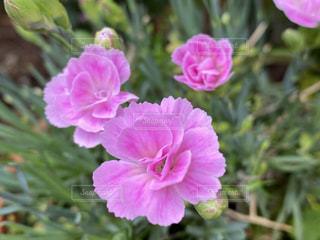 花のクローズアップの写真・画像素材[3195072]